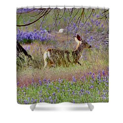 Shower Curtain featuring the photograph Deer In The Meadow by Debby Pueschel