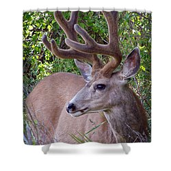 Shower Curtain featuring the photograph Buck In The Woods by Athena Mckinzie