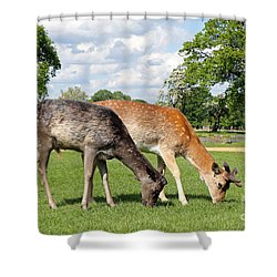 Two Deer Shower Curtain