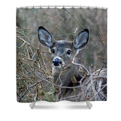 Shower Curtain featuring the photograph Deer by Karen Silvestri