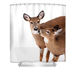 Deer Kisses Shower Curtain