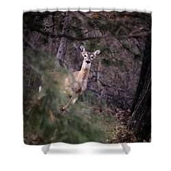 Deer's Stomping Grounds. Shower Curtain by Joshua Martin