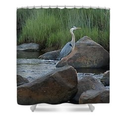 Shower Curtain featuring the photograph Definitely Blue Heron by Francine Frank