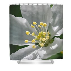 Delcate Widflower With Beautiful Stamen Shower Curtain