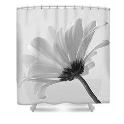 Shower Curtain featuring the photograph Delicate Daisy by Anita Oakley