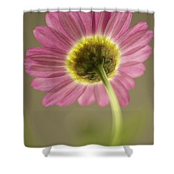 Delicate Daisy Shower Curtain