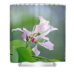 Delicate Delight Shower Curtain