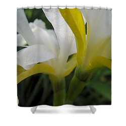 Shower Curtain featuring the photograph Delicate Iris by Cheryl Hoyle