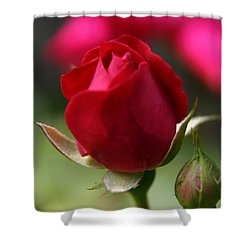 Shower Curtain featuring the photograph Delicate Opening  by Denyse Duhaime