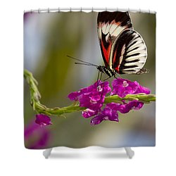 delicate Piano Key Butterfly Shower Curtain