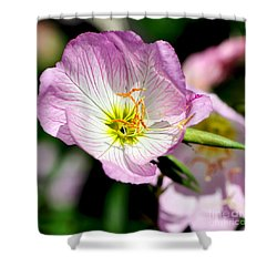 Delicate Poppy Shower Curtain by Kaye Menner