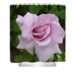 Shower Curtain featuring the photograph Delicate Purple Rose by Lingfai Leung