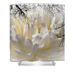 Delicate Shower Curtain by Sherman Perry