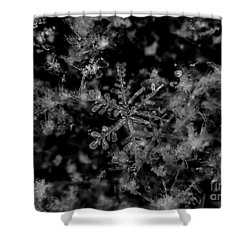 Delicate Snow Shower Curtain by Cheryl Baxter