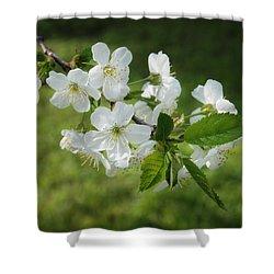 Delicate Springtime Shower Curtain by Ari Salmela