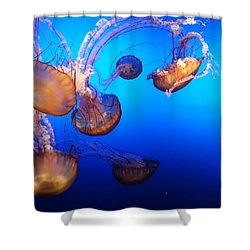 Shower Curtain featuring the photograph Delicate Waltz by Caryl J Bohn