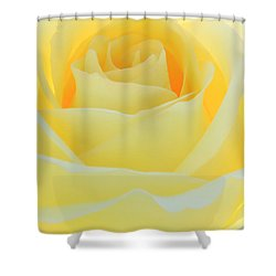 Delicate Yellow Rose Shower Curtain by Sabrina L Ryan