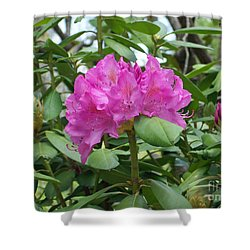 Shower Curtain featuring the photograph Delicate Beauty by Roberta Byram