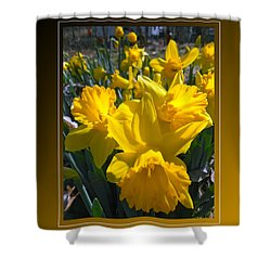 Delightful Daffodils Shower Curtain by Patricia Keller