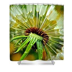 Delightful Dandelion Shower Curtain by Frozen in Time Fine Art Photography