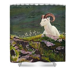 Denali Dall Sheep Shower Curtain by Mike Robles