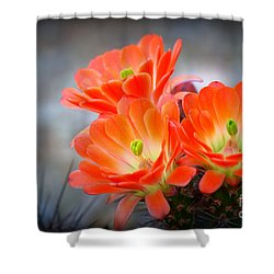 Desert Ablaze  Shower Curtain by Ruth Jolly