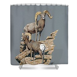 Desert Bighorn Rams Shower Curtain