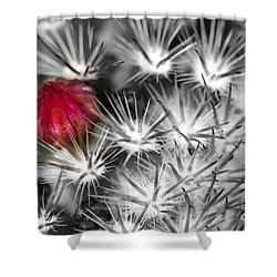 Desert Bloom Bw Shower Curtain