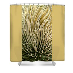 Desert Green Shower Curtain by Ben and Raisa Gertsberg