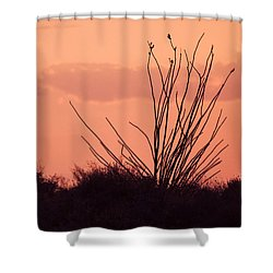 Desert Nights Shower Curtain