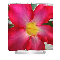 Shower Curtain featuring the photograph Desert Rose		 by Kristine Merc