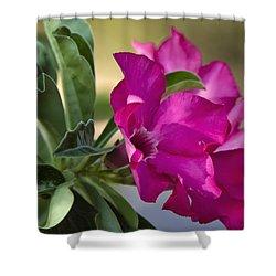 Desert Rose  Shower Curtain by Saija  Lehtonen
