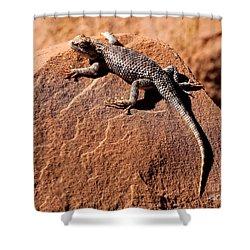 Desert Spiny Lizard Shower Curtain by Marty Fancy