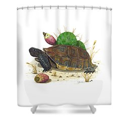 Desert Tortoise Shower Curtain by Cindy Hitchcock