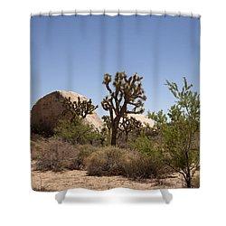 Desert Trees Shower Curtain by Amanda Barcon