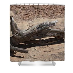 Shower Curtain featuring the photograph Desert Wildwood by Fortunate Findings Shirley Dickerson