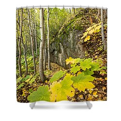 Devil's Club In Fall Shower Curtain