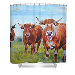 Devon Cattle Shower Curtain