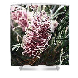 Dew Covered Grevillea Shower Curtain