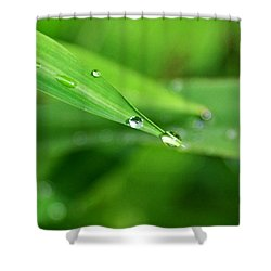 Shower Curtain featuring the photograph Dew Drop by Jean Haynes