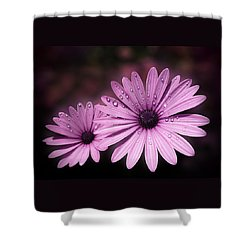Shower Curtain featuring the photograph Dew Drops On Daisies by Valerie Anne Kelly
