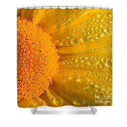 Shower Curtain featuring the photograph Dew Drops On Daisy by Terri Gostola