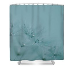 Dew Drops On Dandelion Seeds Shower Curtain