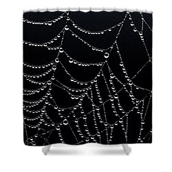 Dew Drops On Web 2 Shower Curtain by Marty Saccone