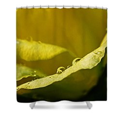 Shower Curtain featuring the pyrography Dew Drops On Yellow by Rebecca Davis