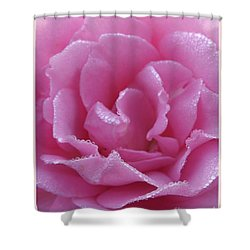 Dew Kissed Rose Shower Curtain by Sara  Raber