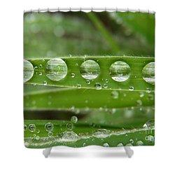 Dew Of Gratitude Shower Curtain