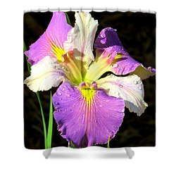 Shower Curtain featuring the photograph Dew On An Iris by Phyllis Beiser