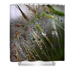 Shower Curtain featuring the photograph Dew On Fountain Grass by Joe Schofield