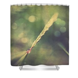 Dew Shower Curtain by Taylan Apukovska